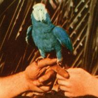 Andrew Bird - Are You Serious