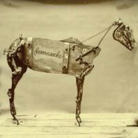 Chadwick Stokes - The Horse Comanche