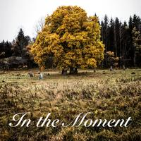 The Colour of Leaves - In the Moment -  FLAC 96kHz/24bit Download