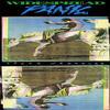 Widespread Panic - Space Wrangler -  Vinyl Record